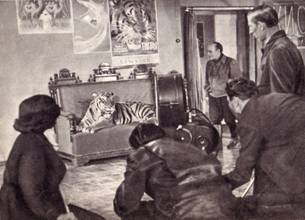 Репетиция одного из эпизодов фильма «Укротительница тигров» с участием Пурша