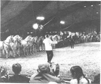 Шестьдесят лошадей Франца Альтгофа в его шапито новой конструкции
