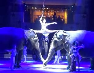 "Аттракцион « Слоны» пр Кристиана и Алекса Гертнер Германия. Attraction ""Elephants"""